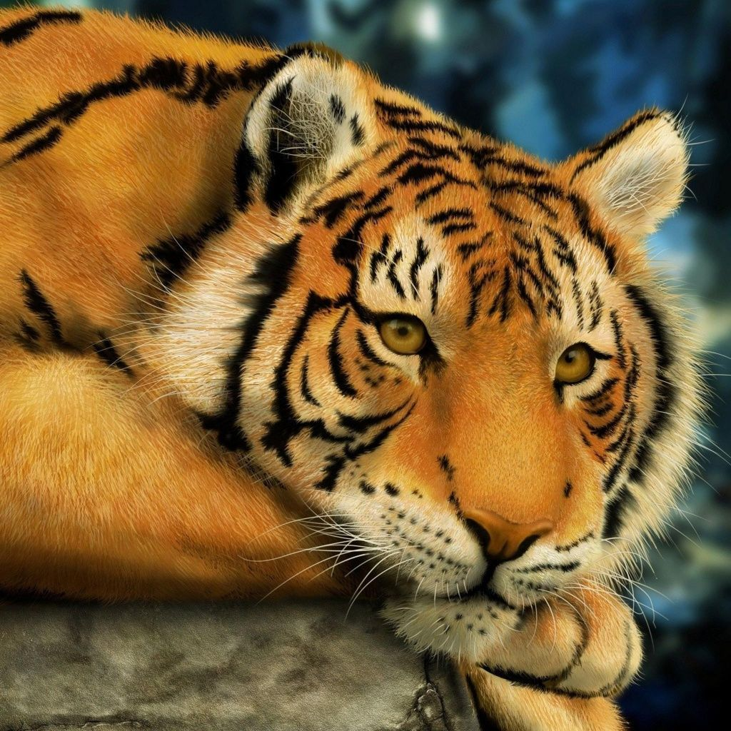 Download · Tiger,1024x1024,free,hot,mobile phone wallpapers,www.hot-