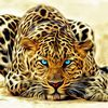 leopard,1024x1024,free,hot,mobile phone wallpapers,www.hot-wallpaper.com