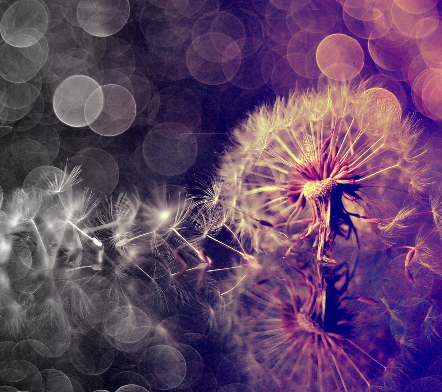 dandelion cell phone wallpaper quotes - photo #39