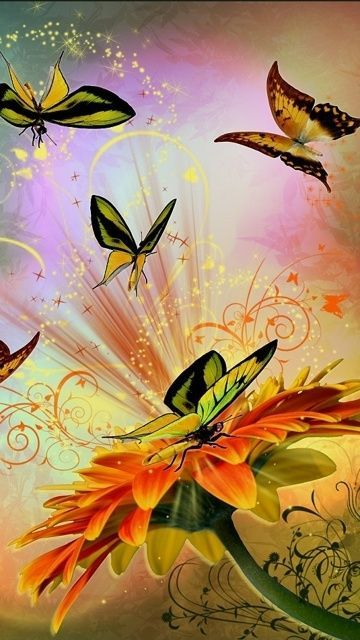 Download · flower & butterflys,360x640,640x360,free,hot,mobile phone wallpapers,
