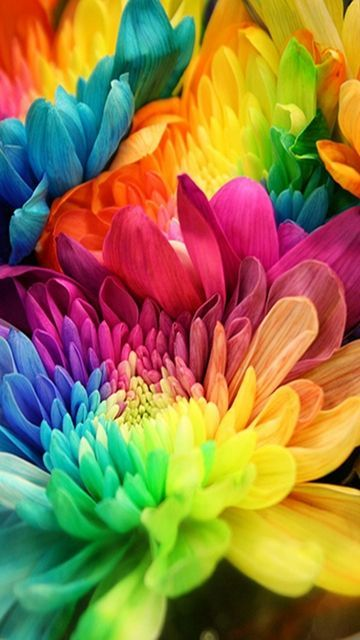 Free Colorful Flower Wallpaper Downloads: 360x640 Hot Wallpapers For Phone Download